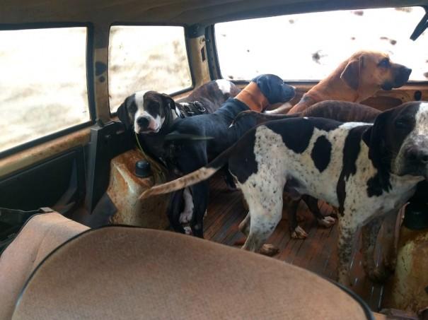 Polícia Ambiental constata maus-tratos em animais usados para caça e aplica multa de R$ 42 mil